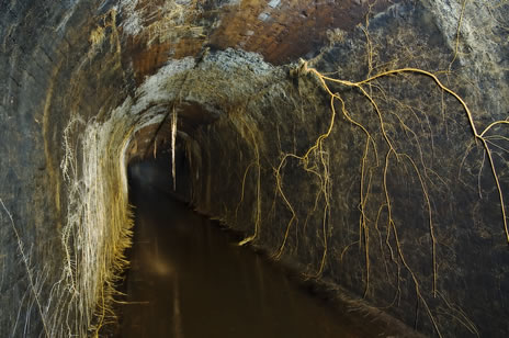 nature reclaims abandoned water tunnel