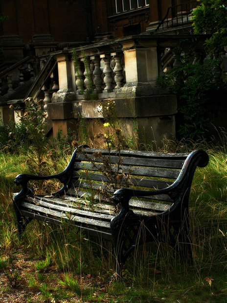 nature reclaims bench